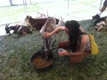 Person Feeding Animals