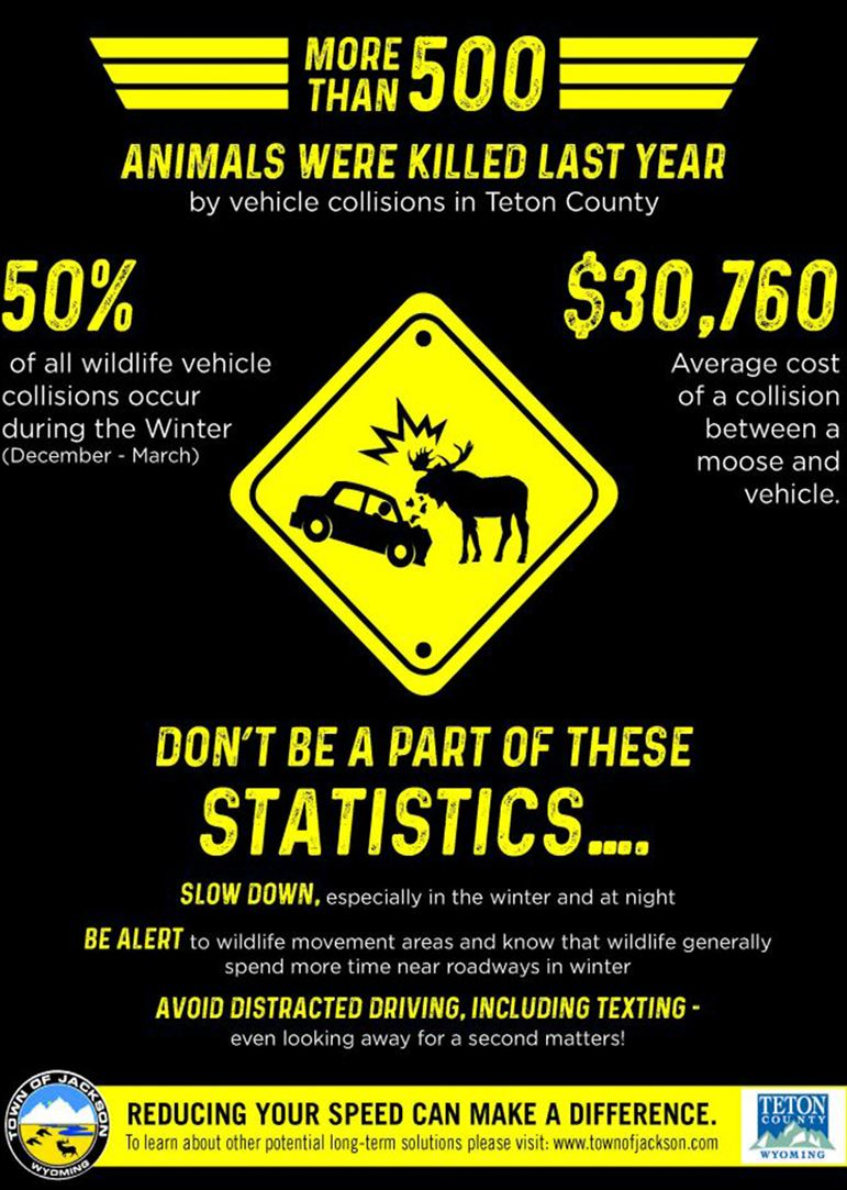 Image of Wildlife and Driving Statistics